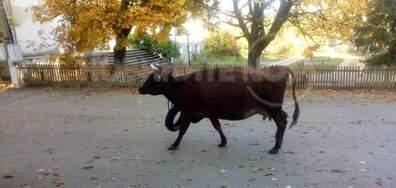 Свободно движещи се животни в село