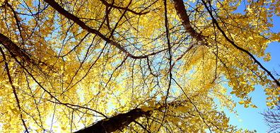 Златна есен!