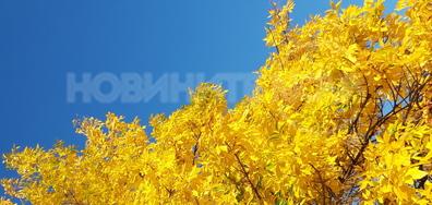 Златна есен
