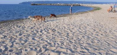Варненските плажове
