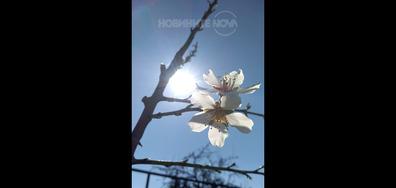 Пролетна снимка от Варна