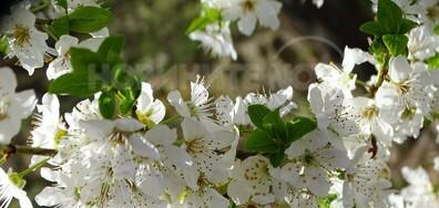 С ухание на пролет!