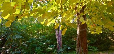 С тихи стъпки идва есента