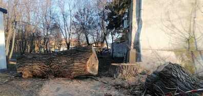 Непремахнато дърво след отрязване