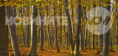 Есен е вече пристигнала тук...