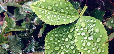 Дъждовно утро