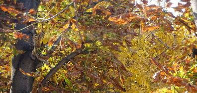 Златните листа на есента!