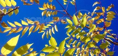 Есенно злато и синьо октомврийско небе