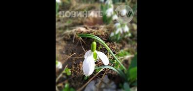 Известяват за пролет