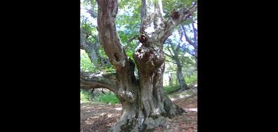 Моето дърво