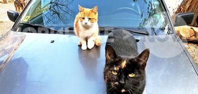 И котките очакват зимата
