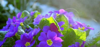 Пролетни синева
