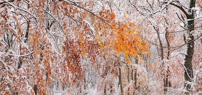 Срещата на есента със зимата