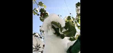 Снежно в Чепеларе