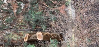Кой отряза дървото в двора на хотел?