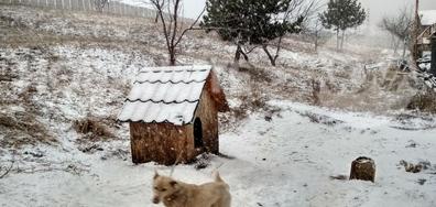 Пак вали сняг