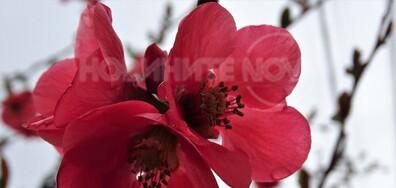 Пролетна надежда, красива Елена днес