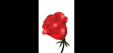 Най-красивата роза, нарисувана с пръсти на телефона за NOVA