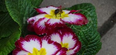 И пчеличките харесват,красотата!