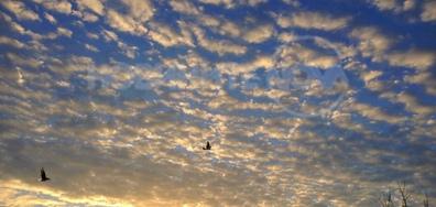Полет на гълъби в утринното небе