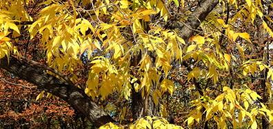 Красивите багри на есента