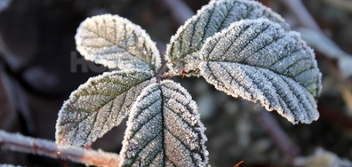 Мразовито утро в Зверино