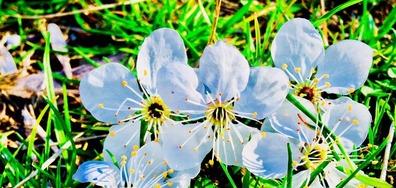 Пролет в Русе