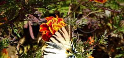 Пеперуда в слънчевия октомври!