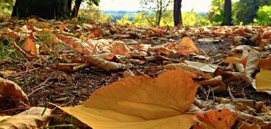 """""""Октомври е и ставам златна, в прегръдката на есента притихвам..."""""""