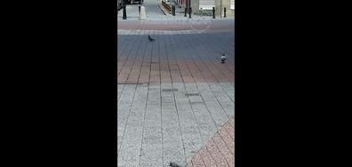 Мерките в Пловдив