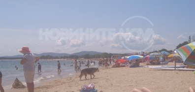 """Бездомни кучета по плаж """"Градина"""""""