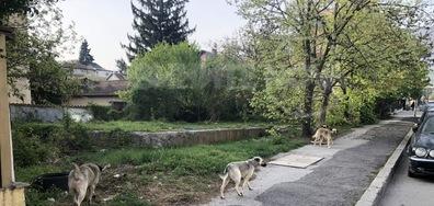 Глутница бездомни кучета