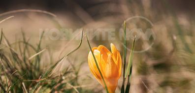 Пролетно оранжево