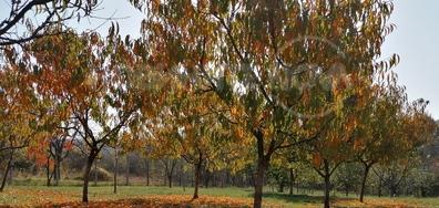 Есен в градината на баба