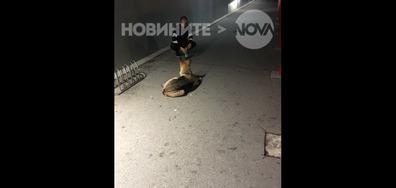 Куче със счупена/обърната лапа