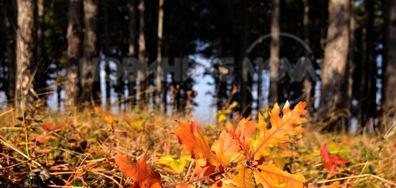 Слънчево настроение в есенната гора