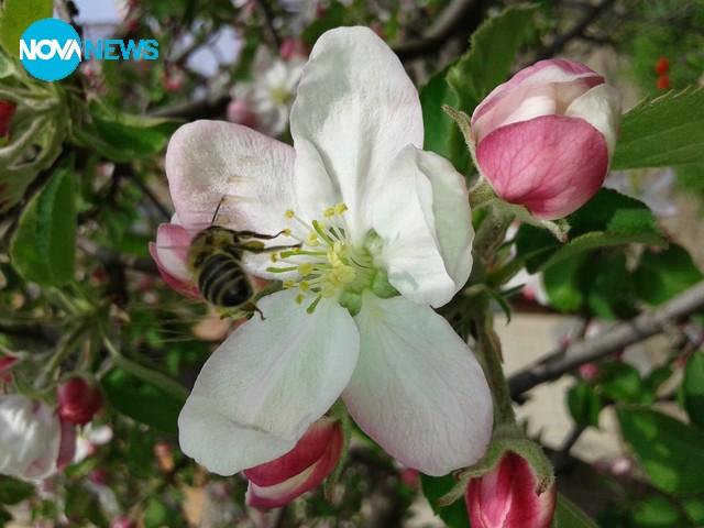 Пролетта е пълна с живот и красота