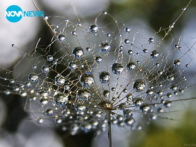 Перлички от дъждовни капки