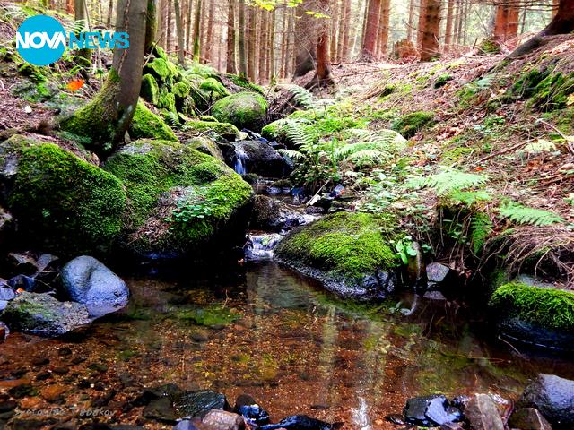 В гората...