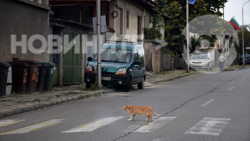 Тревненски пешеходец със самочуствие