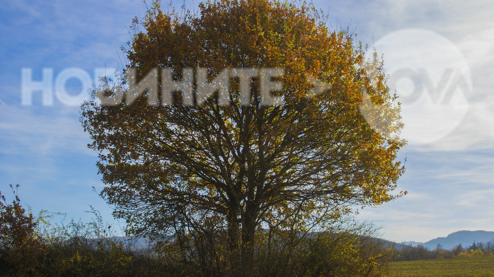 Дървото на есента