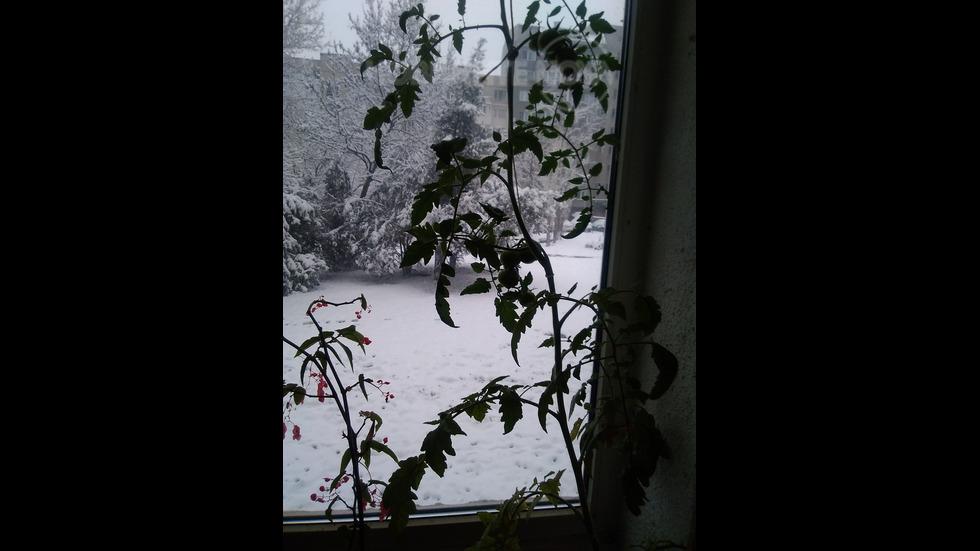 Градина на терасата