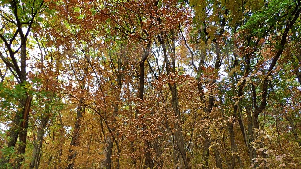 Есента в Лозенска планина