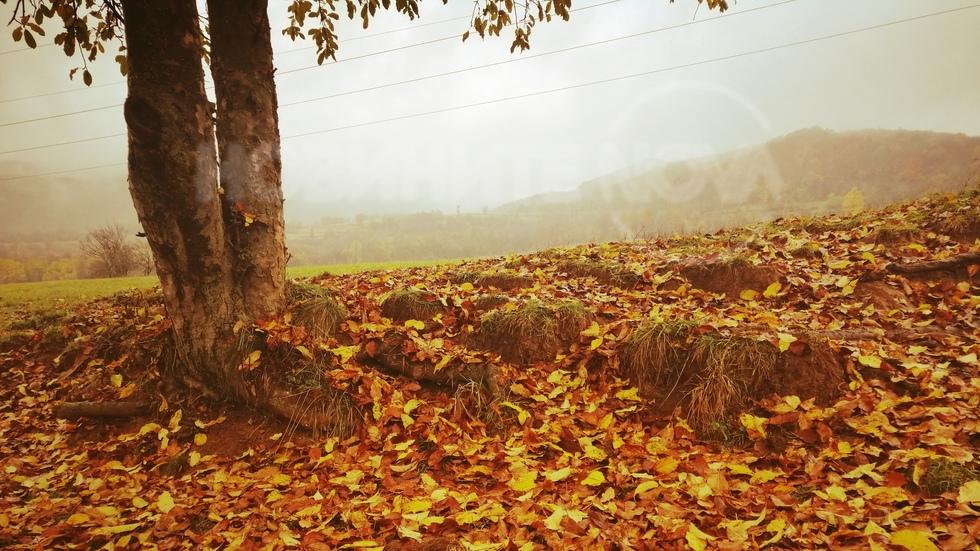 Есенните листа