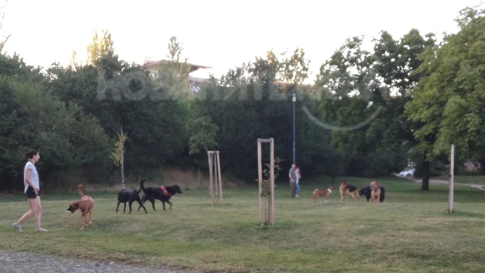 Пуснати кучета в парк