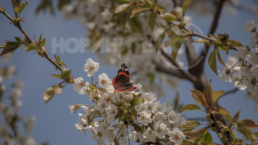 Пролет пеперуди