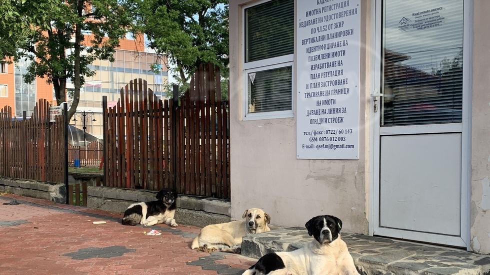 Самоков пълен с бездомни кучета