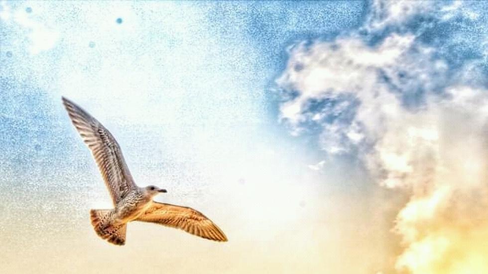 Птици в красивото небе