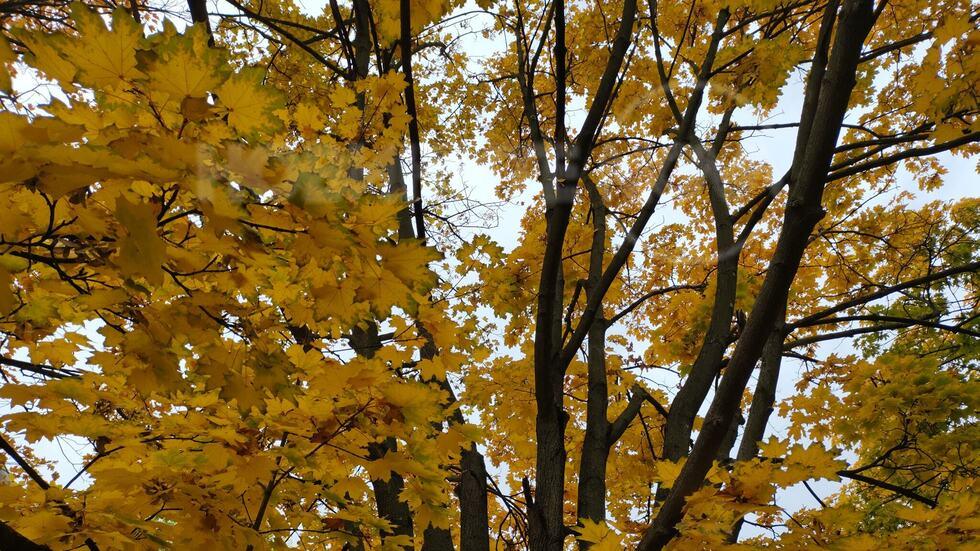 Есен в Монтана