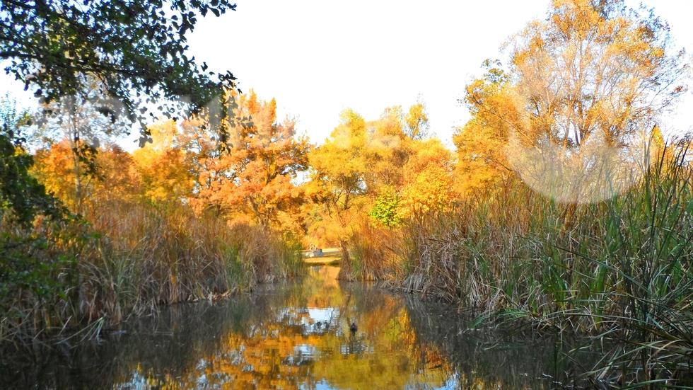 Златна есен в Южния парк, София